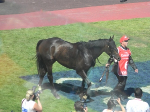 Fiorente, the winning beauty of the day.